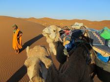 ma-kamelen sahara.jpg