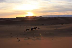 marokko - woestijn - zonsondergang - kameel.jpg