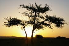 marokko - woestijn - zonsondergang.jpg