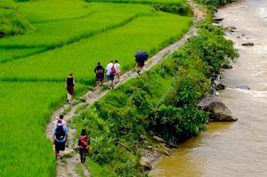 vn-rijstvelden wandelen.jpg