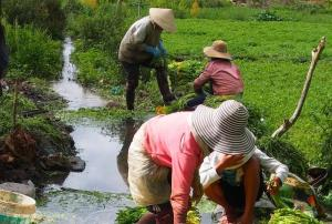 vn-werken op het land in vietnam.jpg