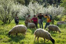 hebron shepherds talk to walkers fritsmeystapi klein.jpg