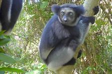 mg-koala madagaskar.jpg