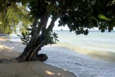 mg-boom op strand goed.jpg