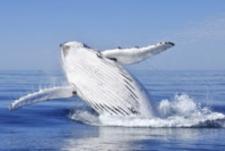mg-walvis madagaskar.jpg