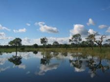 br-refflecting-trees-in-pantanal-1554972.jpg