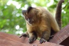 br-aapje-pantanal-1380859.jpg