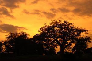 Duurzame reizen en vrijwilligerswerk in Benin, Afrika