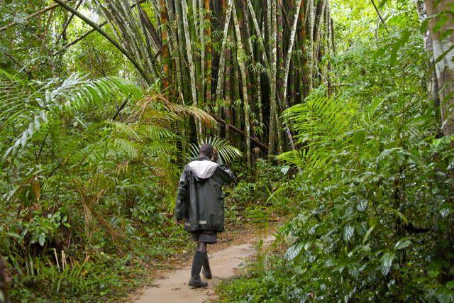 regenwoud Sierra Leone
