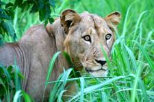 Natuurreservaat in Benin